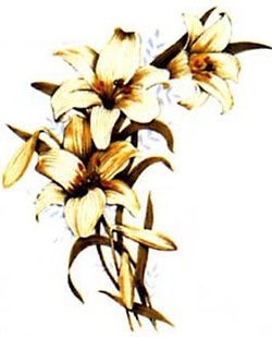 Easter Lily - Lily Spray