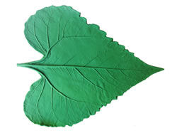 Catalpa Leaf Pattern 11 inch