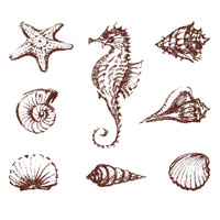 Freshwater and Sea Life Decals