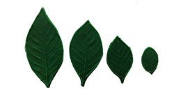 Gardenia Leaf Pattern Set 3/2.5/2/1 inch