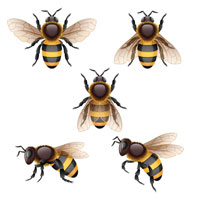 Insects Decals