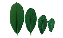 Magnolia Leaf Pattern Set 3/3.75/5/6.5 inch