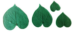 Morning Glory Leaf Pattern Set 4/3.5/3/1.5 inch
