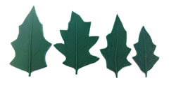Wild Pumpkin Leaf Pattern Set of 4
