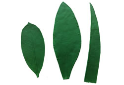 Leaf Pattern Special Assortment 6.5/9 inch