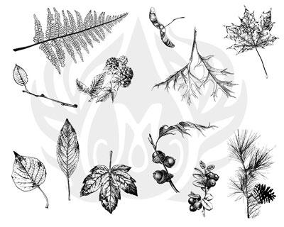 Mayco Designer Silkscreen DSS-111 Botanical- Leaves