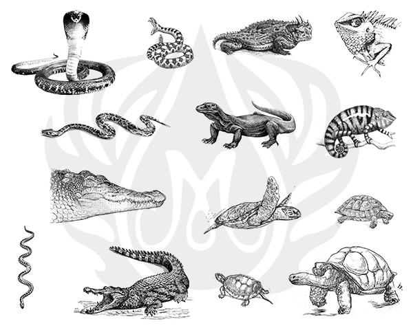 Mayco Designer Silkscreen DSS-135 Reptiles