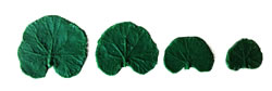 Geranium Leaf Pattern Set 2/1.5/1/.75 inch