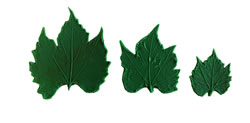 Small Grape Leaf Pattern Set of 3