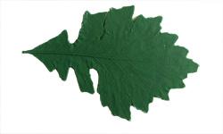 Lg Oak 10 inch