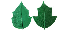 Poinsettia Leaf Pattern Set Medium - 4.5 inch