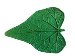 Wild Gourd Leaf - 10.5 inch
